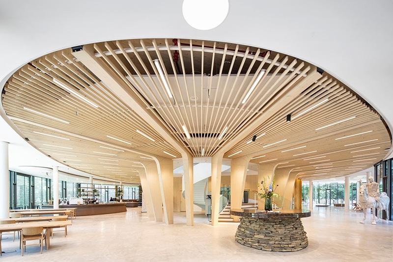 Houten constructie van Triodos Bank, circulariteit in de bouw | DGMR